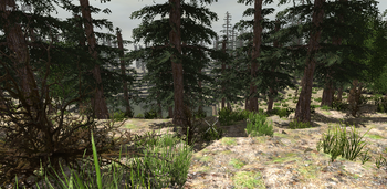 PineForest.png