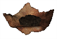 MapleSeed.png