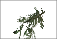 PineBranch03.png