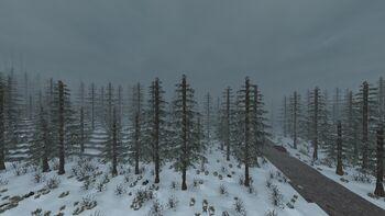 SnowyForest.jpg