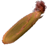 FoodCropGraceCorn.png