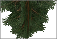 PineBranch.png