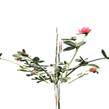 ResourceCropChrysanthemumPlant.png