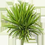 PlantYucca.png
