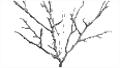 SnowyDeadBush.png