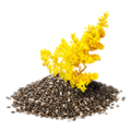 GoldenrodSeed.png