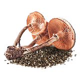 MushroomSeed.png