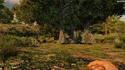 Treefarmplots.jpg
