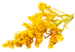 GoldenrodFlower.png
