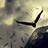 Aquilas99's avatar