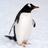 EenPinguin's avatar