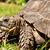 Omni Turtle
