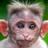 Dandamanzco's avatar