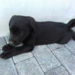 Husky555's avatar