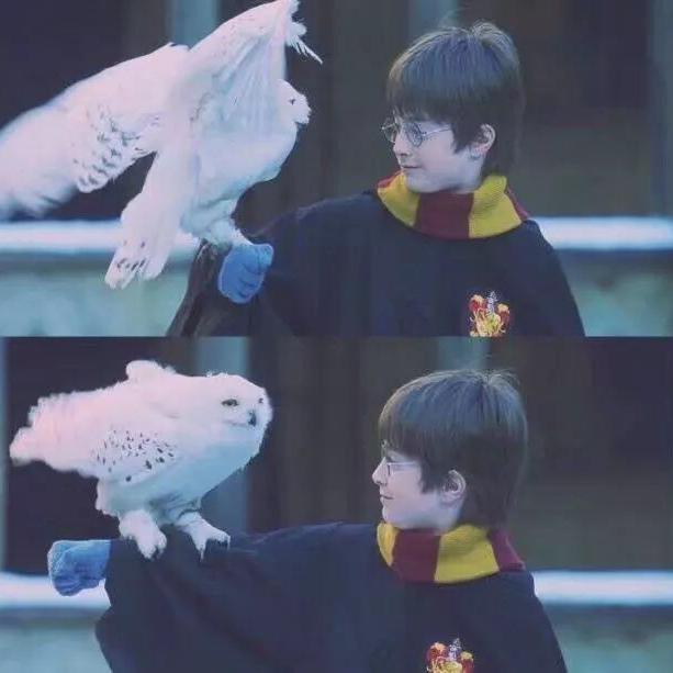 Joeee Potter
