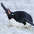Penguinkingpin