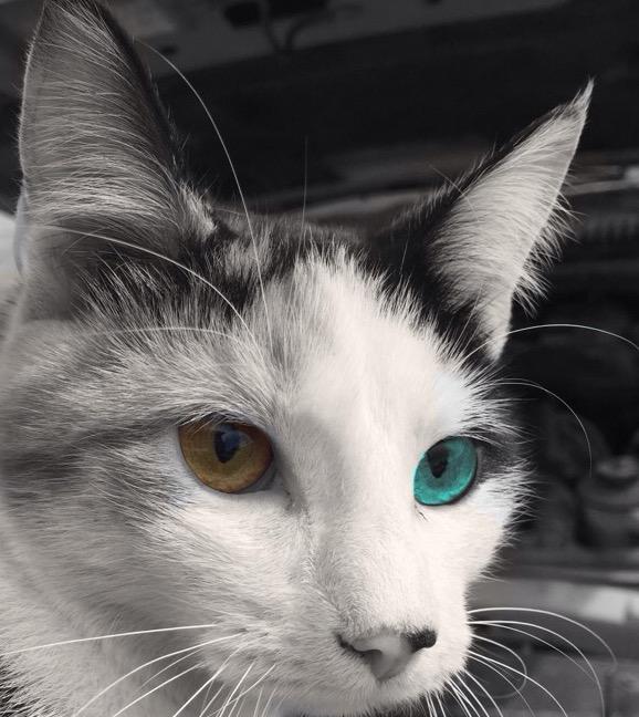 CactorTheGasopod's avatar