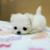 LovePuppies