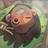 Souhidori's avatar
