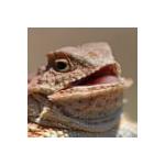 LeafCutSkill's avatar