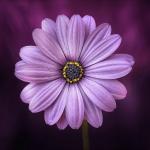 Peppermint Girl's avatar