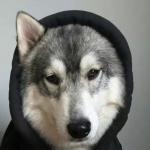 WolfXCIX