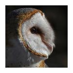 QuickWhitt7's avatar
