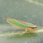 BiologeXY's avatar