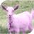 Snowhares Animal Jam's avatar
