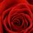Saiph123's avatar