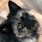FloofyCorgiFox's avatar