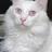 Frosteddlake's avatar