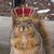 King of teh Squirrels