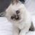 Kittygirl12