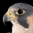 Vnut's avatar