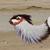 20firebird