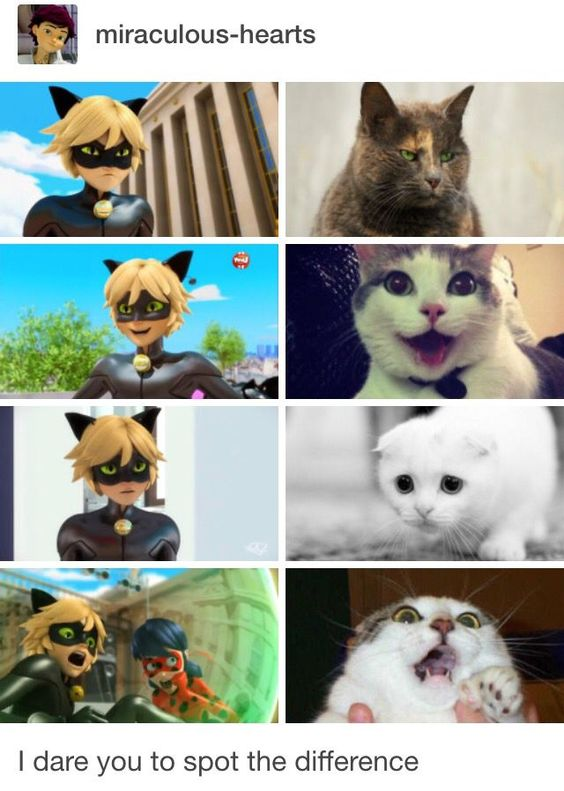 Real life Cat Noir!!!!