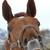 Horse1628