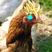 ZBaconGuy's avatar