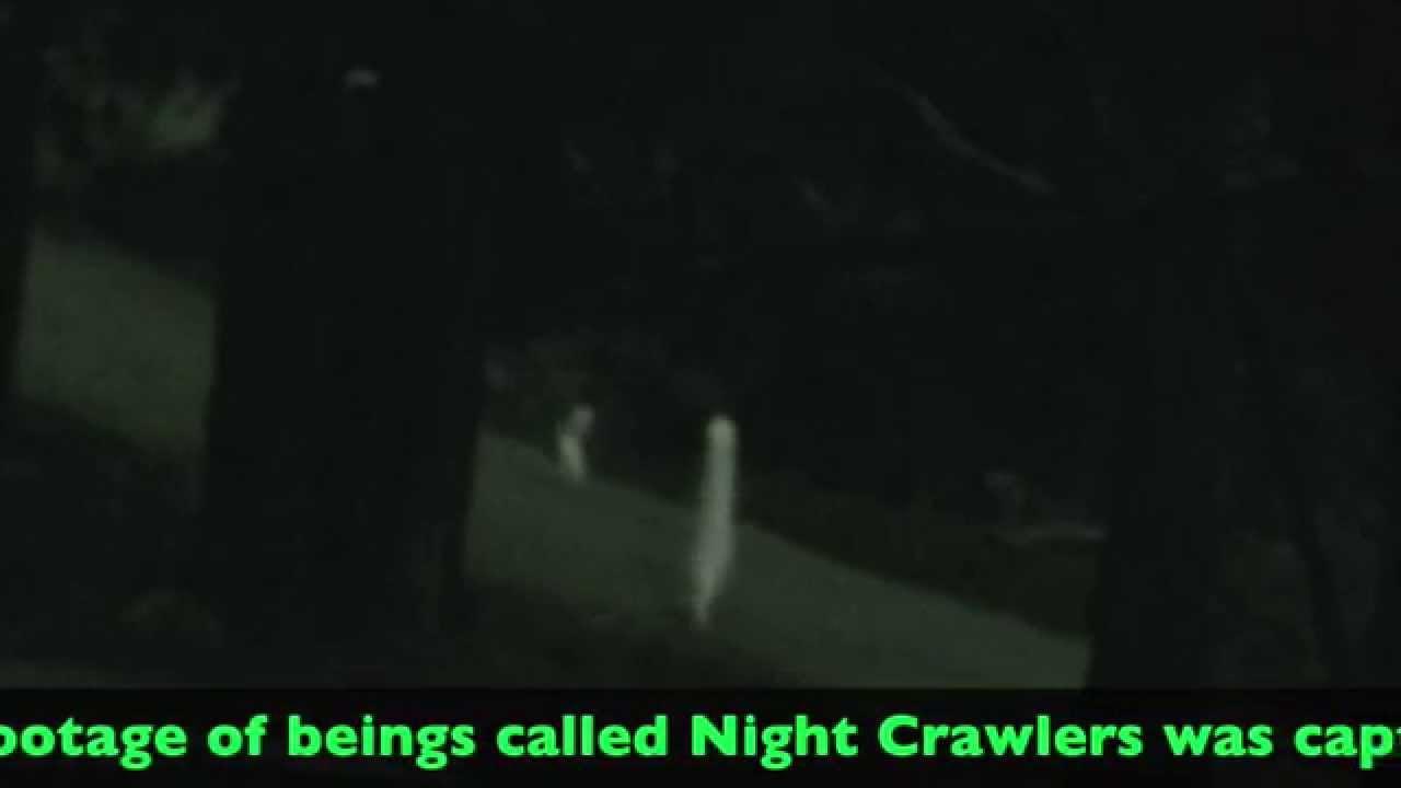 Night Crawler Mystery Solved
