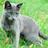Wilgdroom's avatar