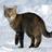 XRubinx's avatar