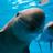 Andresini05's avatar