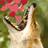 Trailtracker's avatar
