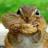 Fatcatzzzzz's avatar