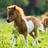 Tänzelndes Pony's avatar