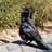 Chirp Darlene's avatar