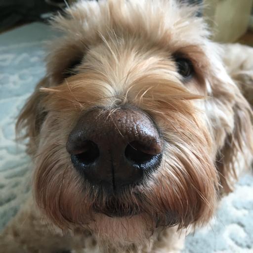 Lizzycheese321's avatar