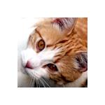 Aurore des Flammes's avatar