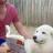 awatar użytkownika Adventure Doge